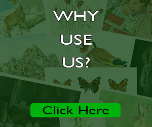 why use us?