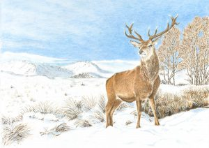 Helen Parry_Stag in Winter